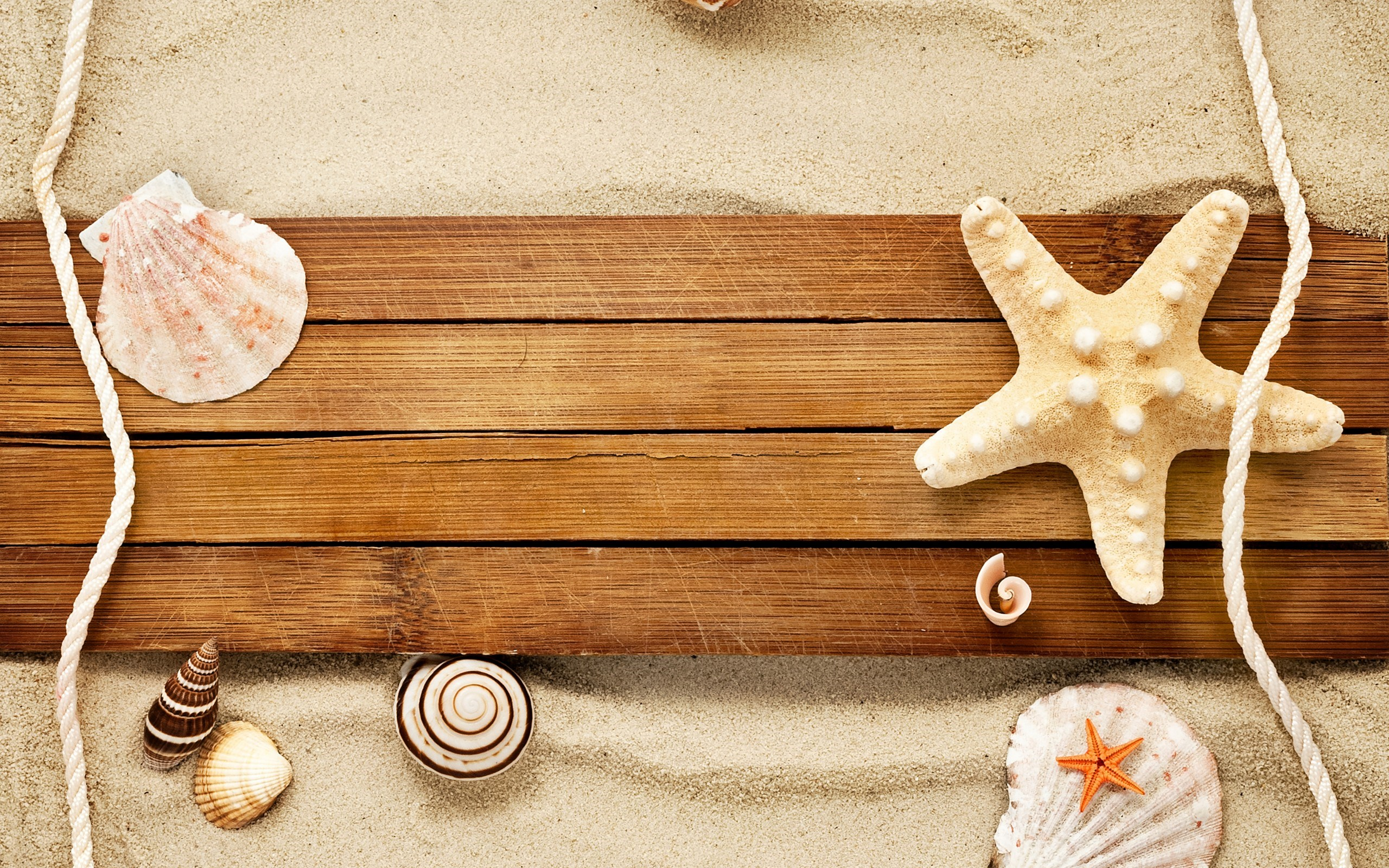 7031409-sand-shells-snail-starfish-beach